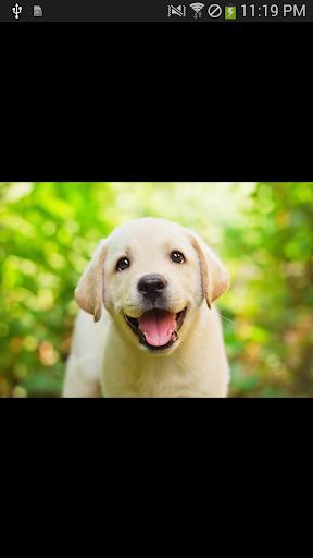 玩攝影App|【無料】犬の壁紙・写真集 vol.5免費|APP試玩