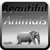 Beautiful Animal Puzzles