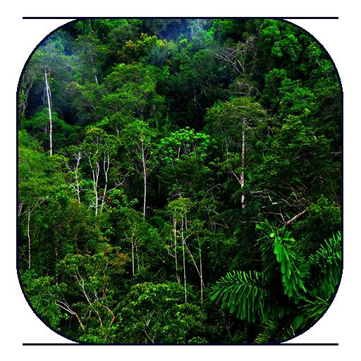 Jungle Live Wallpaper LOGO-APP點子