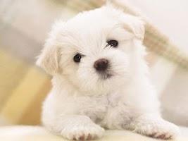 Screenshot of Cute Puppy Dog HD