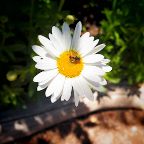 flower by Dawnadine Yazzie-Harvey - Flowers Single Flower ( life, nature, beauty, insect, flower )