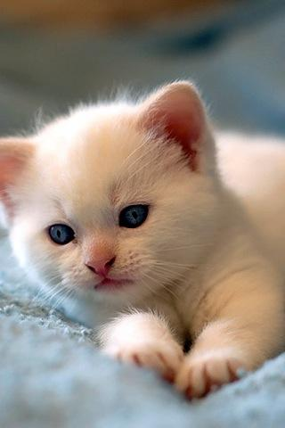 Cute Cat Backgrounds - screenshot