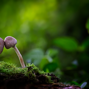 i'm with you by Aris Susanto - Nature Up Close Mushrooms & Fungi ( mushroom, nature, natural )