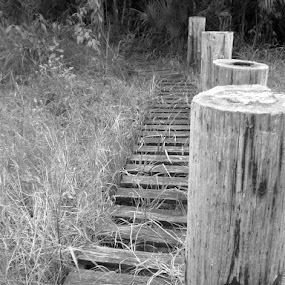 Into The Swamp by Rich Eginton - Black & White Landscapes ( b&w, grass, posts, walkway, boards )