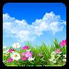 Blume  Live Hintergrund