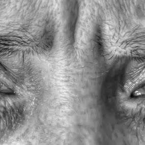 Eyes by Joe Butler - People Body Parts (  )