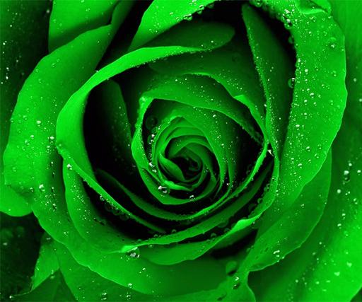 玩免費個人化APP|下載緑のバラの壁紙 app不用錢|硬是要APP
