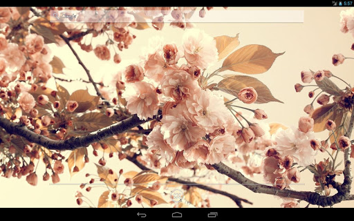 玩免費個人化APP|下載Flowers on the tree Wallpaper app不用錢|硬是要APP