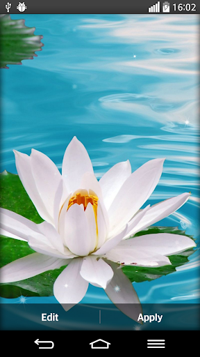 蓮の花のライブ壁紙