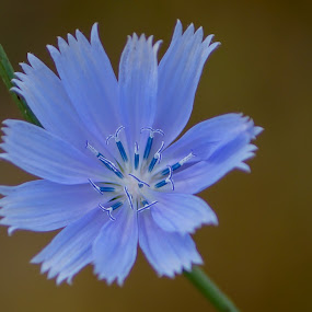 Blue flower by Janice Poole - Flowers Single Flower ( macro, blue, flower,  )