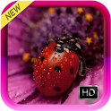 Ladybug Live Wallpaper HD icon