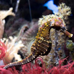 Hanging On by Dale Versteegen - Animals Sea Creatures (  )