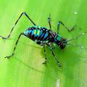 cricket or katydid