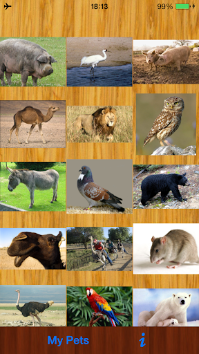 Animals Call