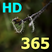 """התנ""""ך 365 HD"""