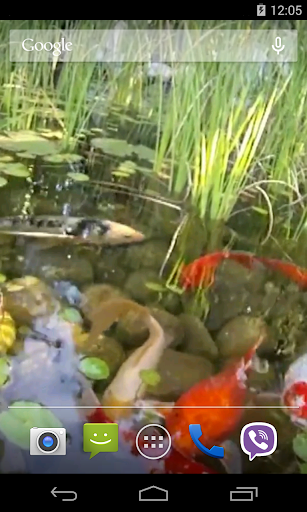 玩免費個人化APP|下載鯉のビデオライブ壁紙 app不用錢|硬是要APP