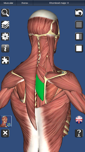 3D Bones and Organs (Anatomy) 3.1.0 screenshots 4