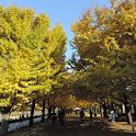 Showa Memorial Park(JP061) icon