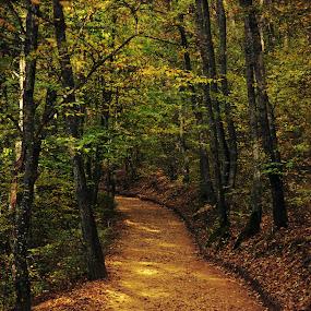 Golden Street by Adrian  Limani - Landscapes Forests ( nature, forest, gold, landscape )