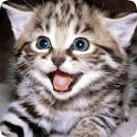 Cat Sounds & Rigtones icon