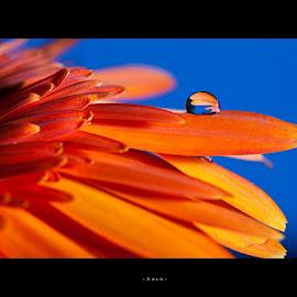 Solo by Sasi Harsha - Typography Words ( macro, macro photography, flowers, water drop )