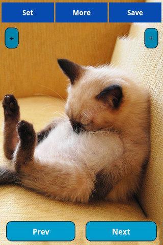 Sleepy cats Wallpapers