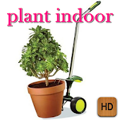 Plant Indoor Tips