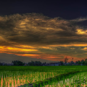 Sunset in the farm by Jan Robin - Landscapes Sunsets & Sunrises