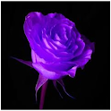 Lilac Roses icon
