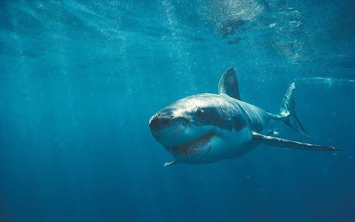 鯊魚高清壁紙