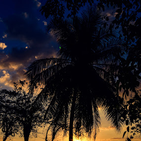 sunset under coconut tree by Rinal Dino - Landscapes Sunsets & Sunrises ( nature, sunset, beach, landscape )