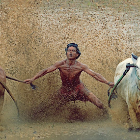 Pacu Jawi Race by M Reza Saptodi - News & Events Entertainment ( #pacujawi #indonesian #padang )