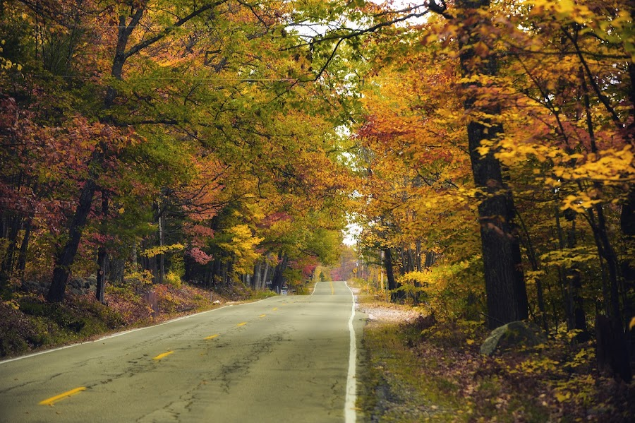 A drive in the fall by Tammy Belanger - City,  Street & Park  Neighborhoods (  )