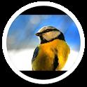 My Photo Wall Spring Birds LWP icon