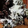 Subtropical Lichen