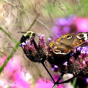 Butterfly and Bee by Christy Julian - Flowers Flowers in the Wild ( butterfly, nature, bee, insect, garden )