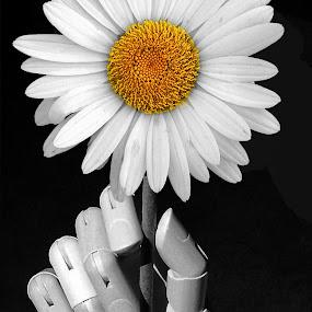 Hand Held by Joseph T Dick - Digital Art Things