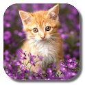 Double Cat Live Wallpaper icon