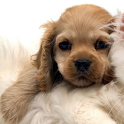 Puppies icon