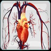 Periksa Jantung Sehat