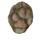 The Paw Note