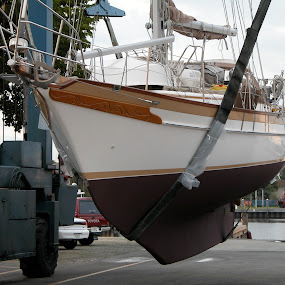 Sailboat hauled out by Priscilla Capelle-Haehn - Transportation Boats ( sailboat in slings, boatyard, transportation, sailboat, hauied out, water, device )