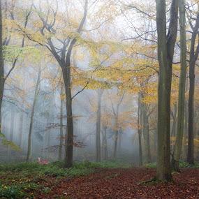 Autumn Scene by Ceri Jones - Landscapes Forests ( woodlands, season, autumn, trees, woods, deer )