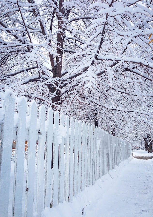 Walking down the sidewalk by Kasey Chesnut - City,  Street & Park  Street Scenes ( fence, winter, cold, snow, white, sidewalk )