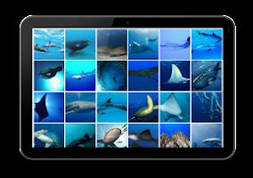 Screenshot of Ocean HD Wallpaper FREE