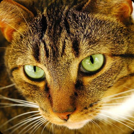 Cat Puzzles 解謎 App LOGO-硬是要APP