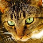 Puzzles Cat icon