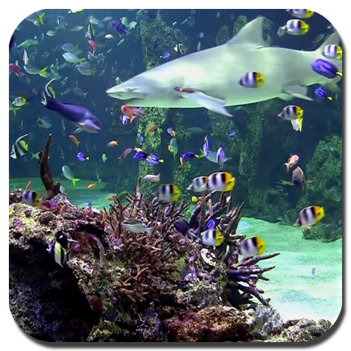 水族館動態桌布 LOGO-APP點子