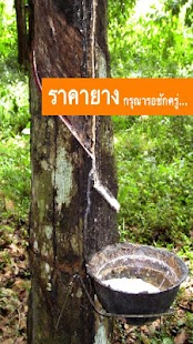 Thailand Rubber price - screenshot thumbnail