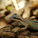 Mauritius ornate day gecko